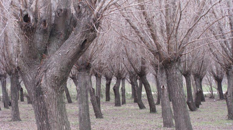 El Plan es como el bosque. Cada uno, un árbol.