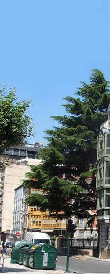 Pamplona 1900 Calle del Padre Moret