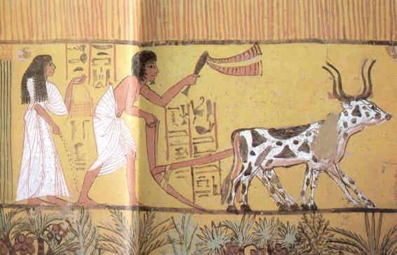 La vida en el antiguo Egipto Trigo