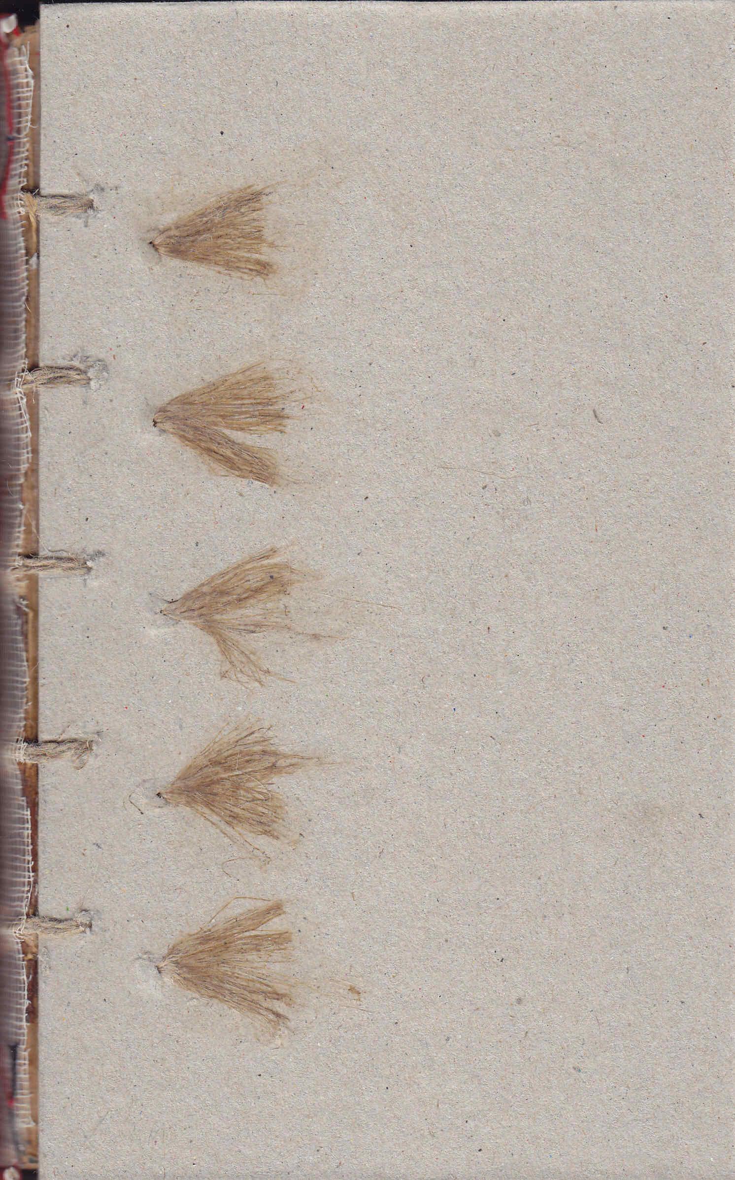 Restauración de libro antiguo Amiano Marcelino y los planos